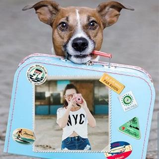 Traveller Dog