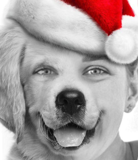 Santa Retriever