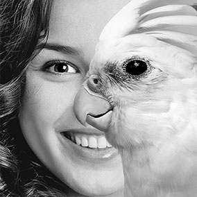 Parrot Face Illusion