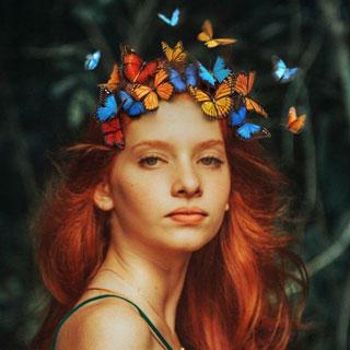 Butterflies Landing
